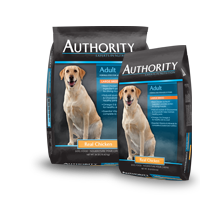 authority adult large breed with real chicken