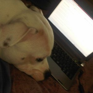 Someone thinks laps were meant for puppies not laptops